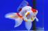 Uploaded image _DSC8967.jpg