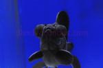 Uploaded image _DSC9000.jpg