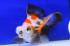 Uploaded image _DSC9123.jpg