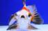 Uploaded image _DSC9137.jpg