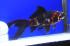 Uploaded image _DSC9150.jpg