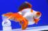 Uploaded image _DSC9600.jpg