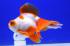 Uploaded image _DSC9609.jpg
