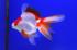 Uploaded image _DSC0284.jpg