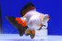 Uploaded image _DSC0338.jpg