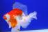 Uploaded image _DSC0505.jpg