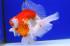 Uploaded image _DSC0506.jpg