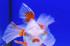 Uploaded image _DSC0884.jpg