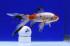Uploaded image _DSC1060.jpg