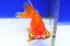 Uploaded image _DSC1151.jpg