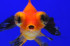 Uploaded image _DSC1282.jpg