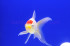 Uploaded image _DSC1517.jpg