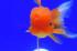 Uploaded image _DSC1754.jpg