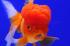 Uploaded image _DSC2149.jpg