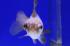 Uploaded image _DSC2164.jpg