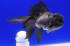 Uploaded image _DSC2418.jpg