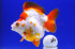 Uploaded image _DSC2849.jpg