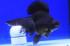 Uploaded image _DSC3014.jpg