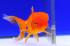Uploaded image _DSC3030.jpg