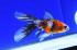 Uploaded image _DSC3266.jpg
