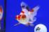 Uploaded image _DSC3447.jpg