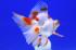 Uploaded image _DSC3450.jpg