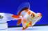 Uploaded image _DSC3507.jpg