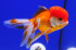 Uploaded image _DSC3660.jpg