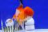 Uploaded image _DSC3680.jpg