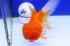 Uploaded image _DSC3690.jpg