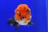 Uploaded image _DSC3775.jpg