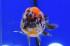 Uploaded image _DSC3805.jpg