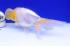 Uploaded image _DSC3872.jpg