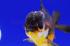 Uploaded image _DSC3886.jpg