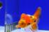 Uploaded image _DSC4033.jpg