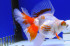 Uploaded image _DSC4903.jpg