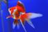 Uploaded image _DSC5096.jpg