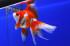 Uploaded image _DSC5103.jpg