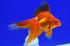 Uploaded image _DSC5352.jpg