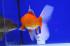 Uploaded image _DSC5408.jpg