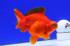 Uploaded image _DSC5541.jpg