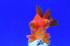 Uploaded image _DSC5607.jpg