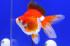 Uploaded image _DSC5640.jpg