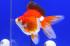 Uploaded image _DSC5641.jpg
