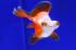 Uploaded image _DSC5657.jpg