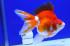Uploaded image _DSC5693.jpg