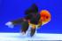 Uploaded image _DSC5815.jpg