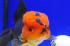 Uploaded image _DSC5816.jpg
