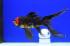 Uploaded image _DSC5876.jpg