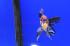 Uploaded image _DSC6212.jpg